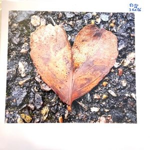 Art Card – Heart Leaf