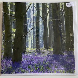 Art Card – Blue bell wood