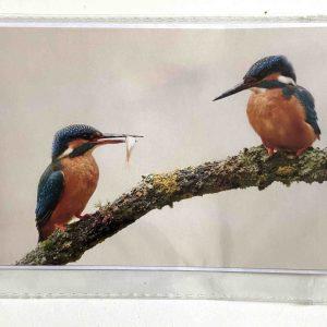 Art Card – Two Kingfishers