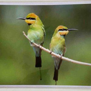 Art Card – Two Birds (CP)