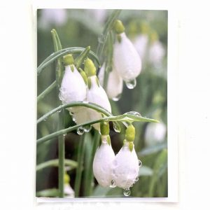 Art Card – Snowdrop
