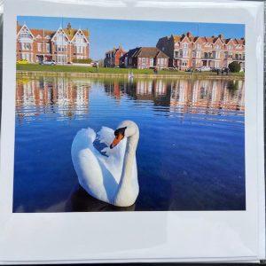 Art Card -Swan