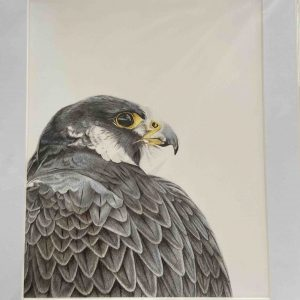 Mounted Prints – Hunter At Hanger View