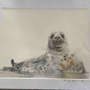 Mounted Prints – Seal Of Approval