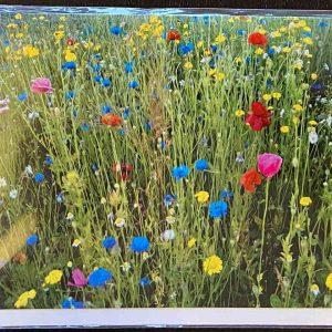 Art Card – Wildflowers (JB)