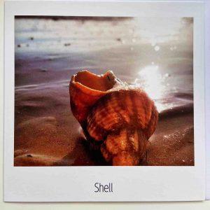 Art Card – Shell
