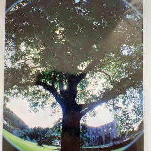 Art Card – Tintern Abbey (lomo fisheye)