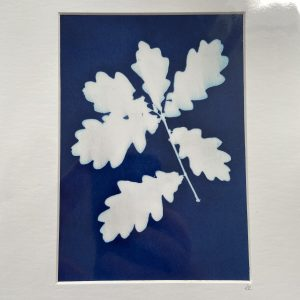 Mounted Prints – Cyanotypes (1)