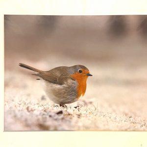 Mounted Prints – Robin (CP)