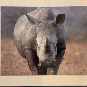 Mounted Prints – Rhino (CP)