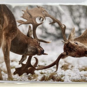 Art Card – Winter Stags