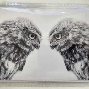 Art Card – Owl Looking At?