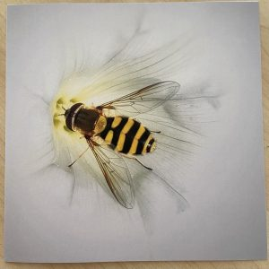 Art Card – Hoverfly (MJ)