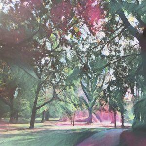 Photographs On Canvas – Hotham Park