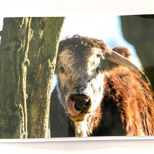 Art Card – Cow