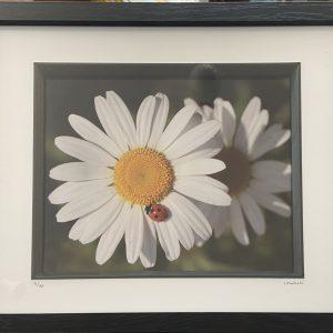 Framed Photography – Daisy, Lady