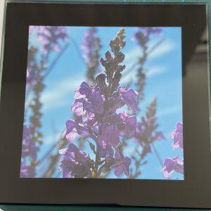 Coasters – Flowers (purple)