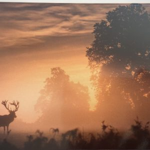 Art Card – Morning Stag – Winner of January Blues – Wildlife Photography