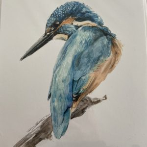 Print – Kingfisher (Limited Edition)