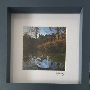 Framed Photography – Arundel Swan