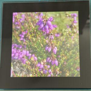 Coasters – Flowers (pink)