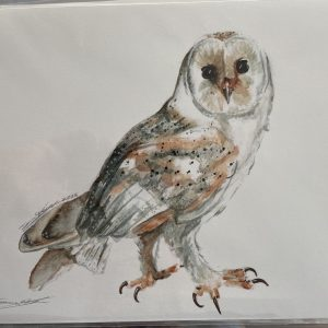 Print – Owl (Limited Edition)