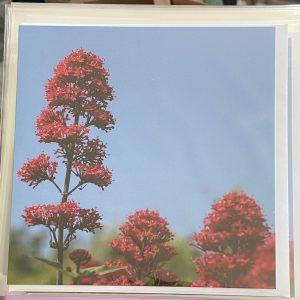 Art Card – Daylight Bloom