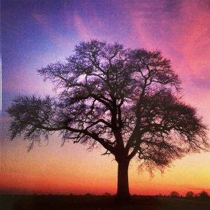 Art Card – Sunset Tree